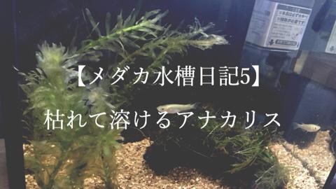 slooProImg_20150614074656.jpg